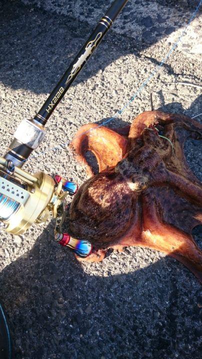 早朝から軟体祭り(^^)v蛸に…アオリイカ…大満足でした✨ワンナック販売デビルクローワームNewブラックラメでアオリのオマケに蛸までGET‼