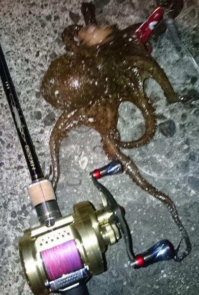 海藻の隙間で蛸get✨