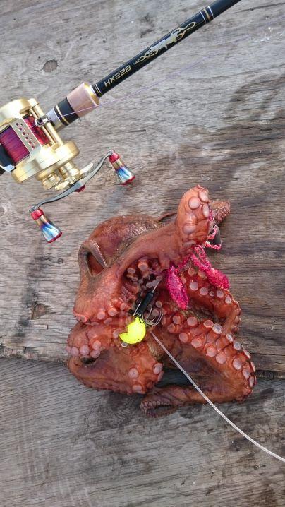 海藻壁際を平行に探り…ナイスな蛸get✨