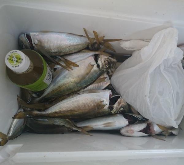本年度初🎣釣り