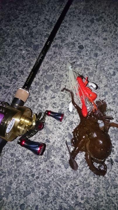 一発目…小蛸get‼ ワンナック販売Newロッドクラーケン82…