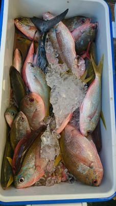 平グルクン(タカサゴ)大漁です カツオ3本☺