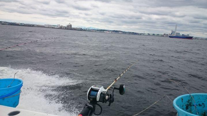 生憎の曇り空でしたが 東京湾のお魚は元気に❗