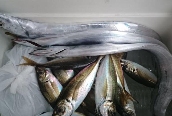 今年度🎵初の太刀魚釣り🎣撃沈