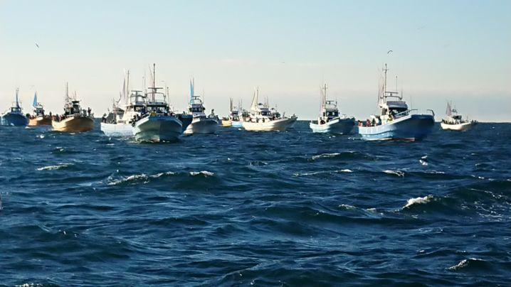 東京湾の太刀魚釣り🍀 相変わらず❗凄い船団ですね