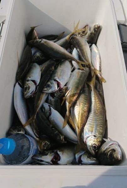 ゴールデンウィーク前に🍀東京湾アジ釣り