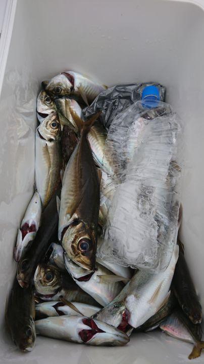 東京湾アジ釣り🚢最近😢渋い釣果にチャレンジしました