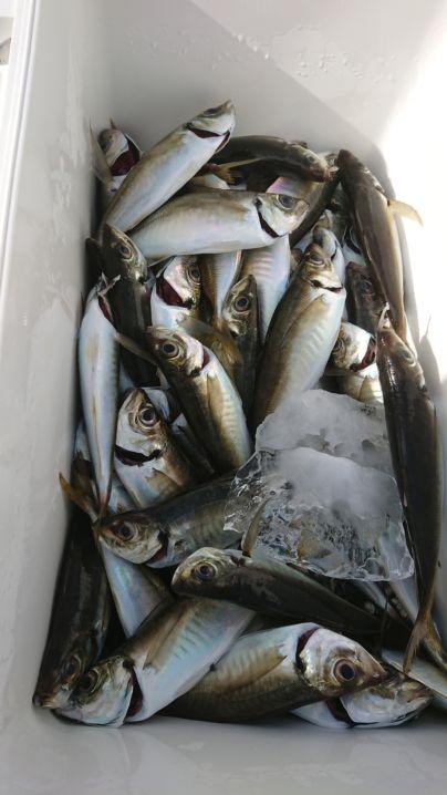 本日も良い釣果で大満足です🎵