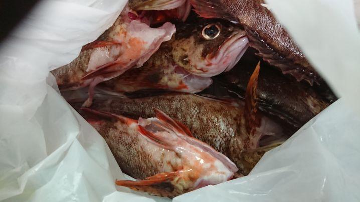台風明けの東京湾太刀魚釣り