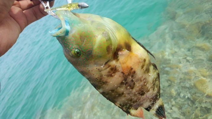 生ニンニクで魚を狙ってみた!