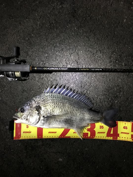 チニングにて42センチの良型が釣れてくれました。