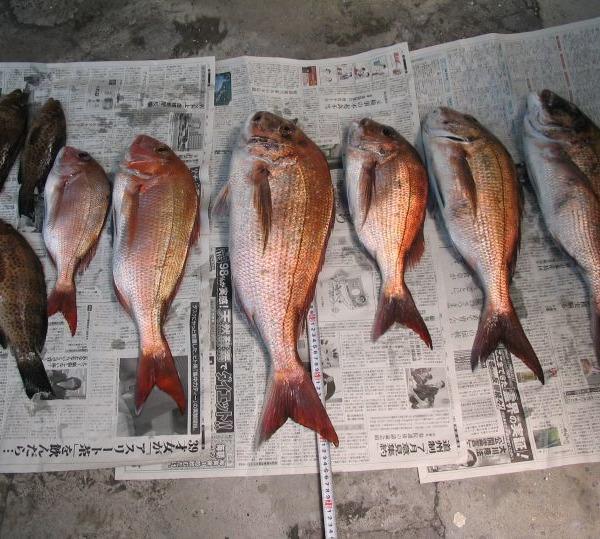 釣とギャンブルは匙加減が難しい気がつけば海にいる