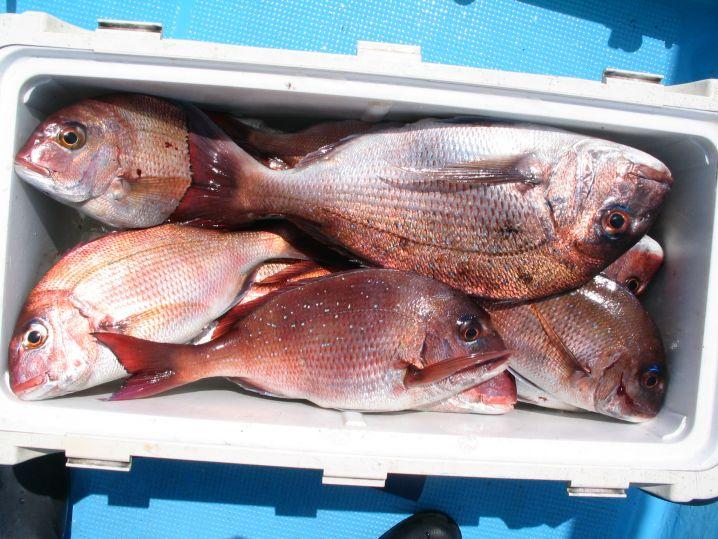 釣は90%思い通りにいかない、大潮で釣れた時間は1時間