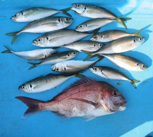 魚は腹が減って食うんじゃない