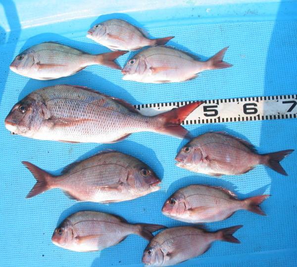 釣りの情報は玉石混合