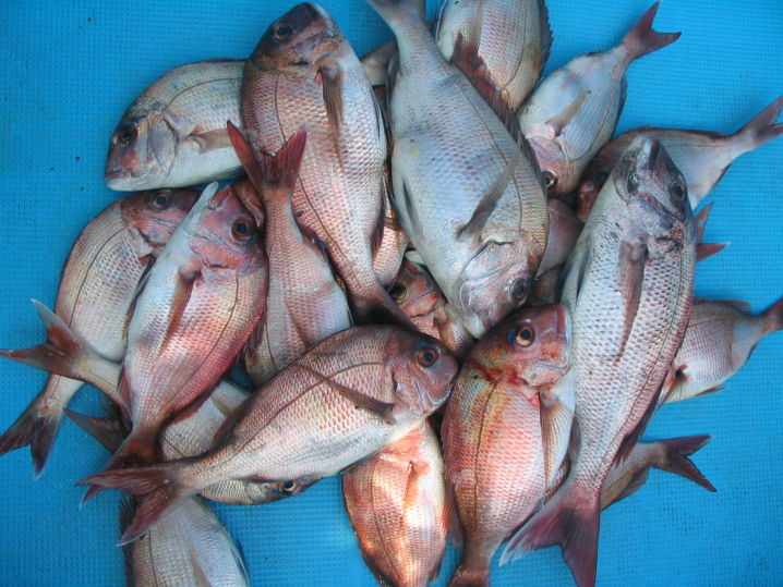 入鯛シーズンは駆け上がり周辺は反応有り、満ち潮二時間前から始め、…