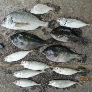 今日、も大漁でした。