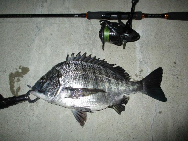 今夜もチニング釣行