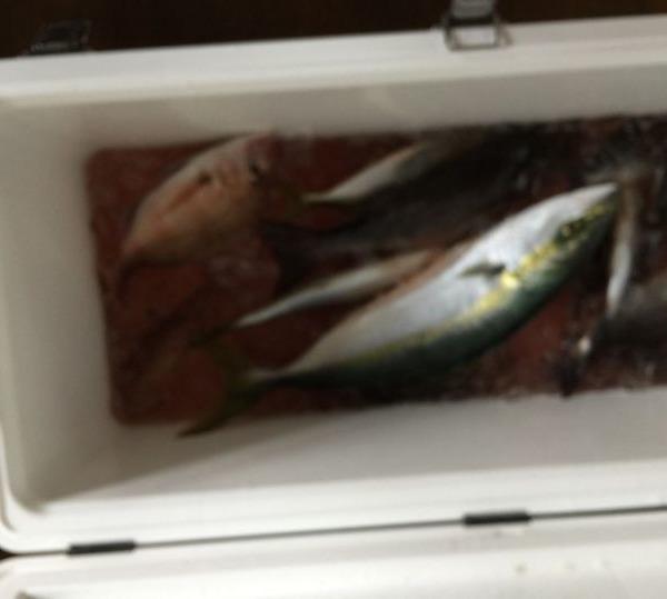 今日も良い釣りができました(#^.^#)