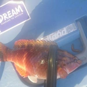 2016年の初餌釣り