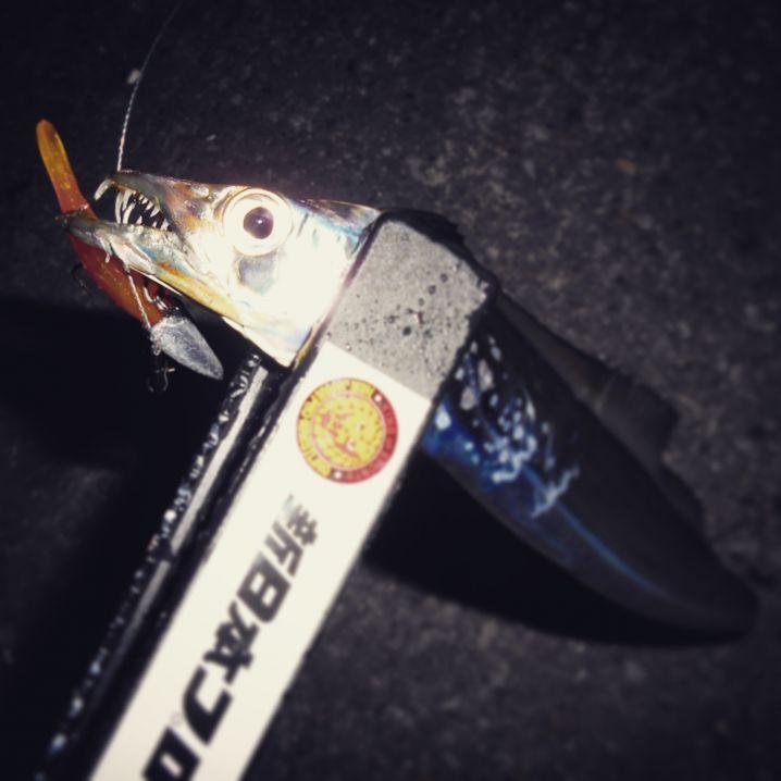 続・ライトワインドで(小)太刀魚in宮崎港。