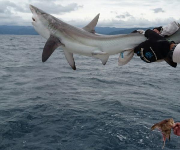 サメの季節