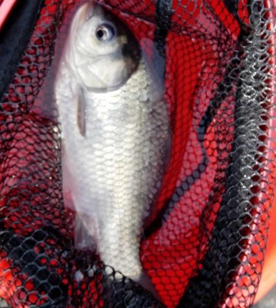 GW初日の釣行です