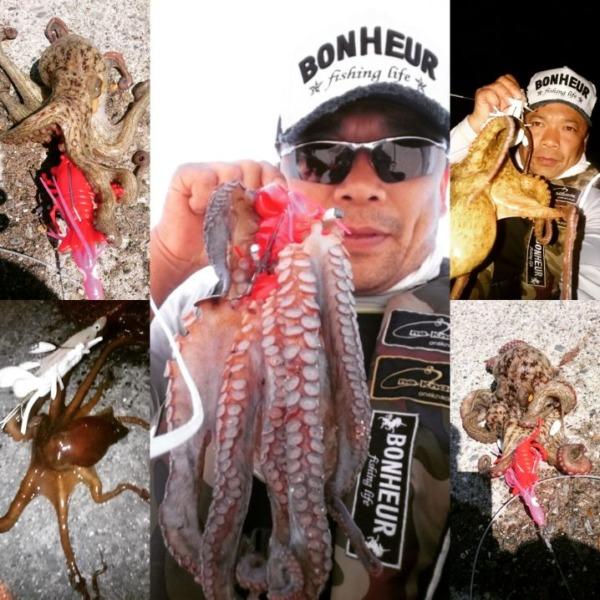 土日で真蛸4の手長蛸1get✨ワンナック販売デビルロブスターワーム好調&最強(^^)v