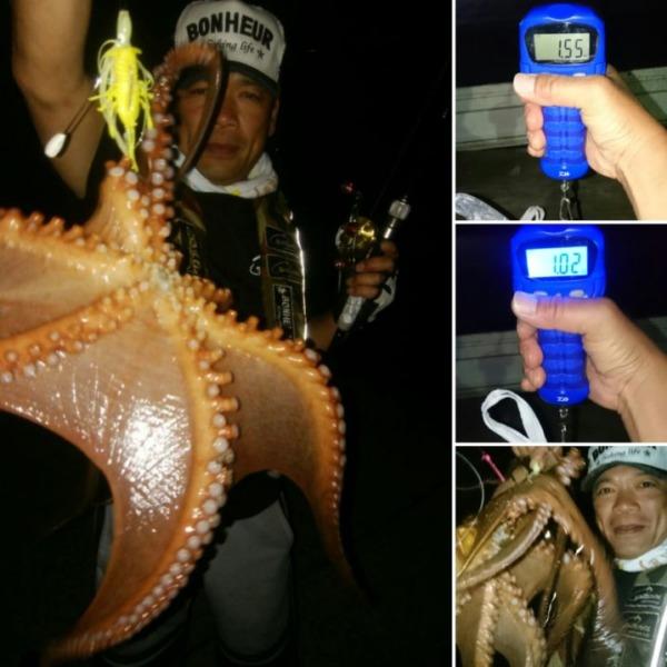 今夜も御約束の蛸↑1.55㌔を頭に→2蛸get🎵これだけ釣れれば最強ルアーでしょう✨