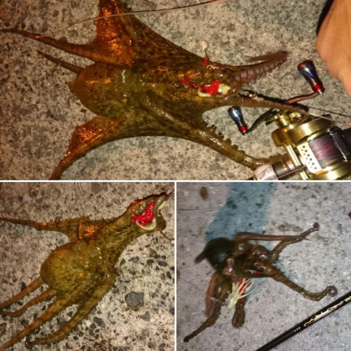 蛸刺…たこ焼…蛸天…蛸飯…蛸シャブ… どう…料理して食べようか…