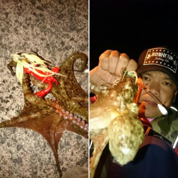 釣人の多い中で3蛸get🎵