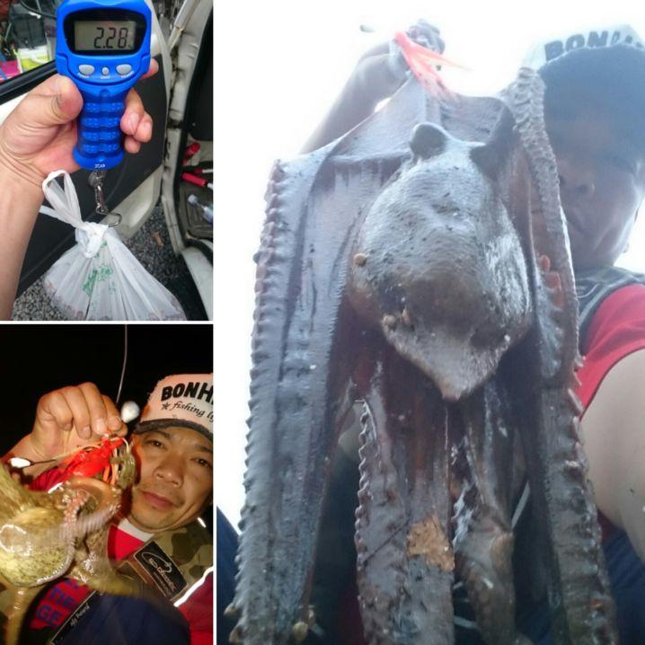 2.28キロ→迫力満点💯…おまけのチビ蛸もGET‼ 資源保護……