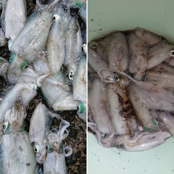 2日間での釣果でした\(^^)/ アオリイカの刺身は…最高に旨…