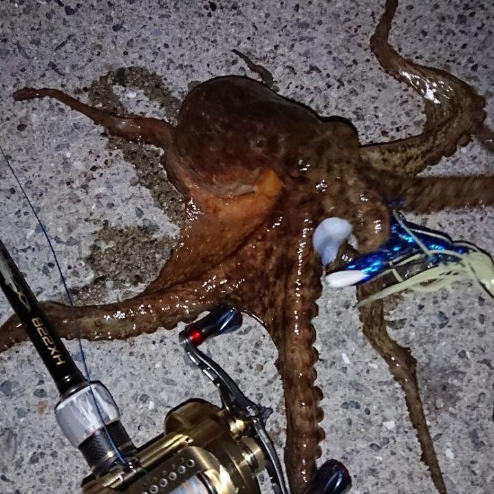 蛸調査✨バッチリでした‼️キープsizeのナイスな1蛸目GET‼…