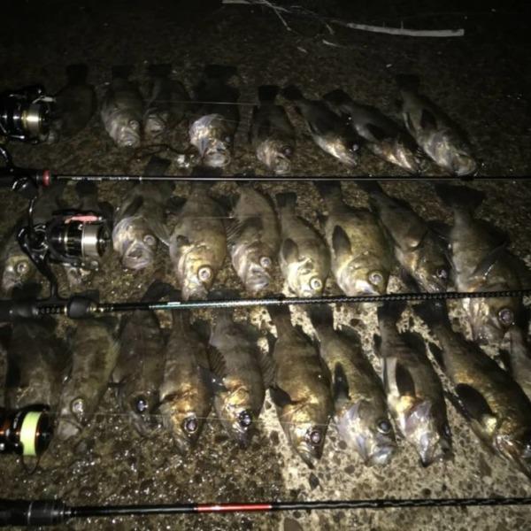 昨夜は…釣友とメバリング‼️爆釣⤴️