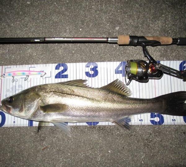 長いミノーで釣りたい!
