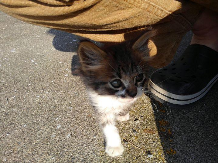 陸に上がったら子猫がかまえと寄ってきてなかなか帰れず