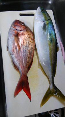ハマチと真鯛