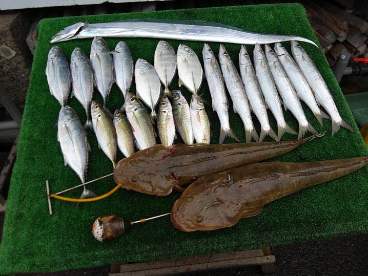 太刀魚 指4×1 マゴチ 57 cm ×2匹 カマス 37 …