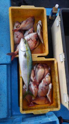 ワラサと真鯛とチダイ