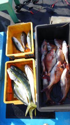 真鯛とワラサとイサキ
