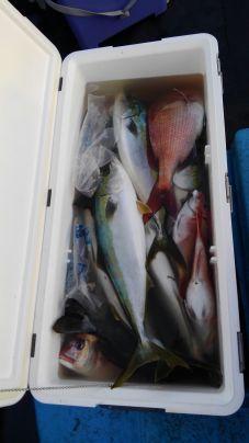 ヒラマサ、ワラサ、真鯛など