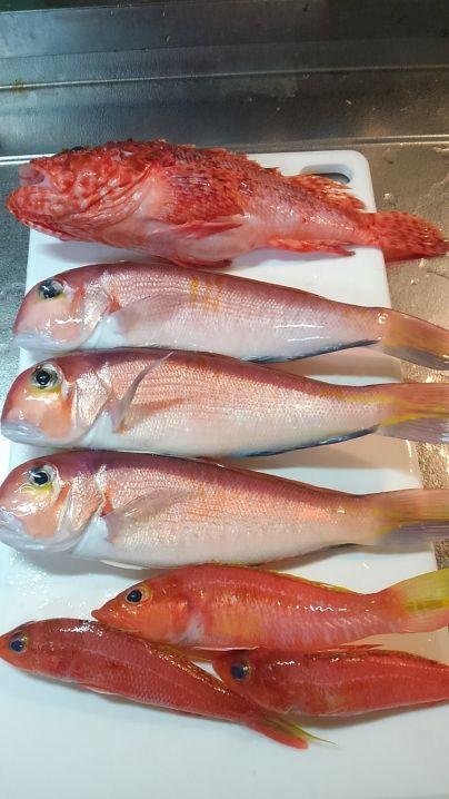 オニカサゴもGet!ヒメコダイさんも美味しい魚です。