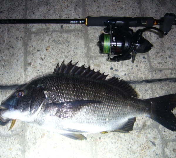 チニング釣行