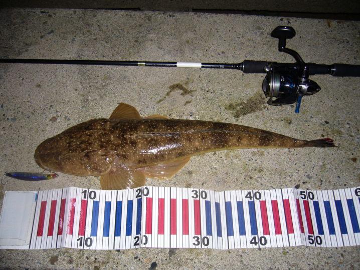 シーバス釣行にて外道を含む釣果