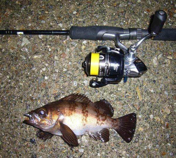 夜釣りに誘われて