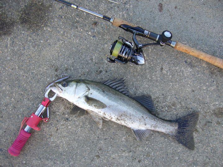 夕方の短時間釣行