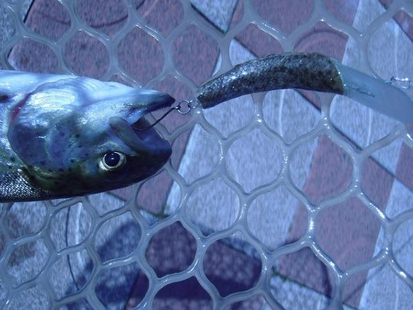 自作のハンドメイドルアー 今度はMクラの魚皮貼りで釣ってきました♪