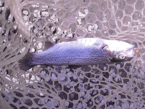 宮城アングラーズビレッジさんのアンビレ道場で9匹の釣果を上げた禁断のメソッド