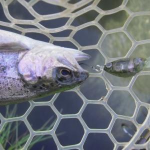 また「100均のハエINクランクベイト」で釣ってきました なんと驚きの2ケタ釣果です